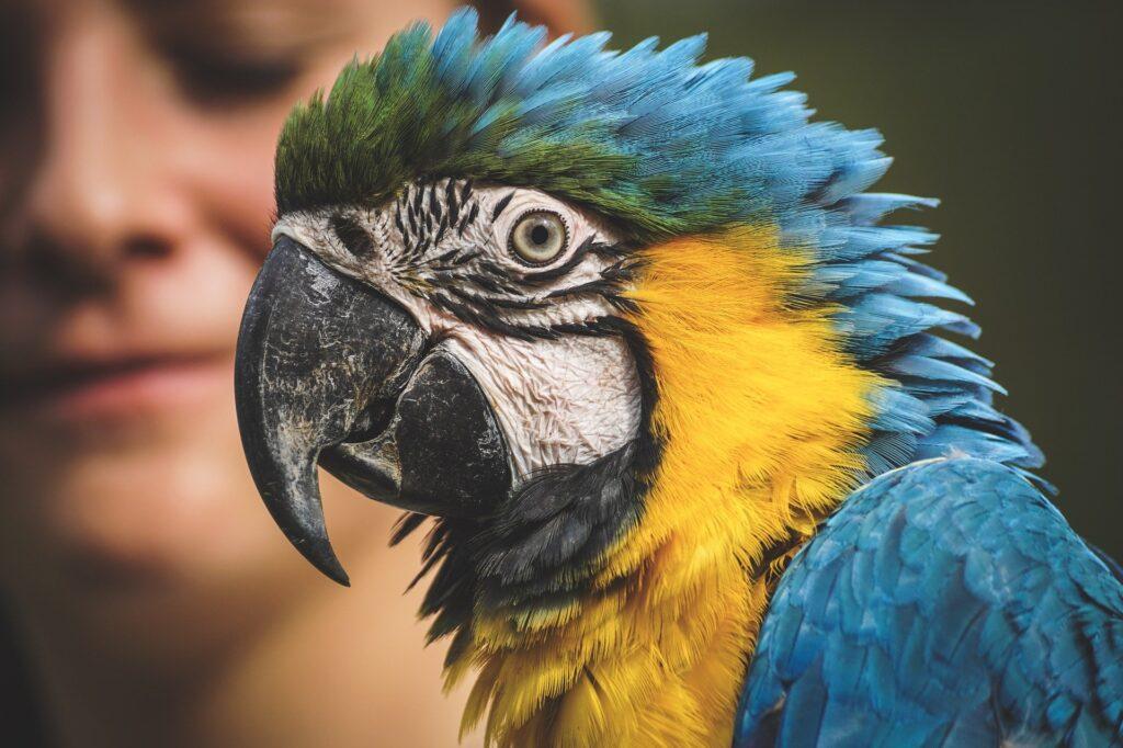 Jaka będzie najlepsza karma dla papug falistych?